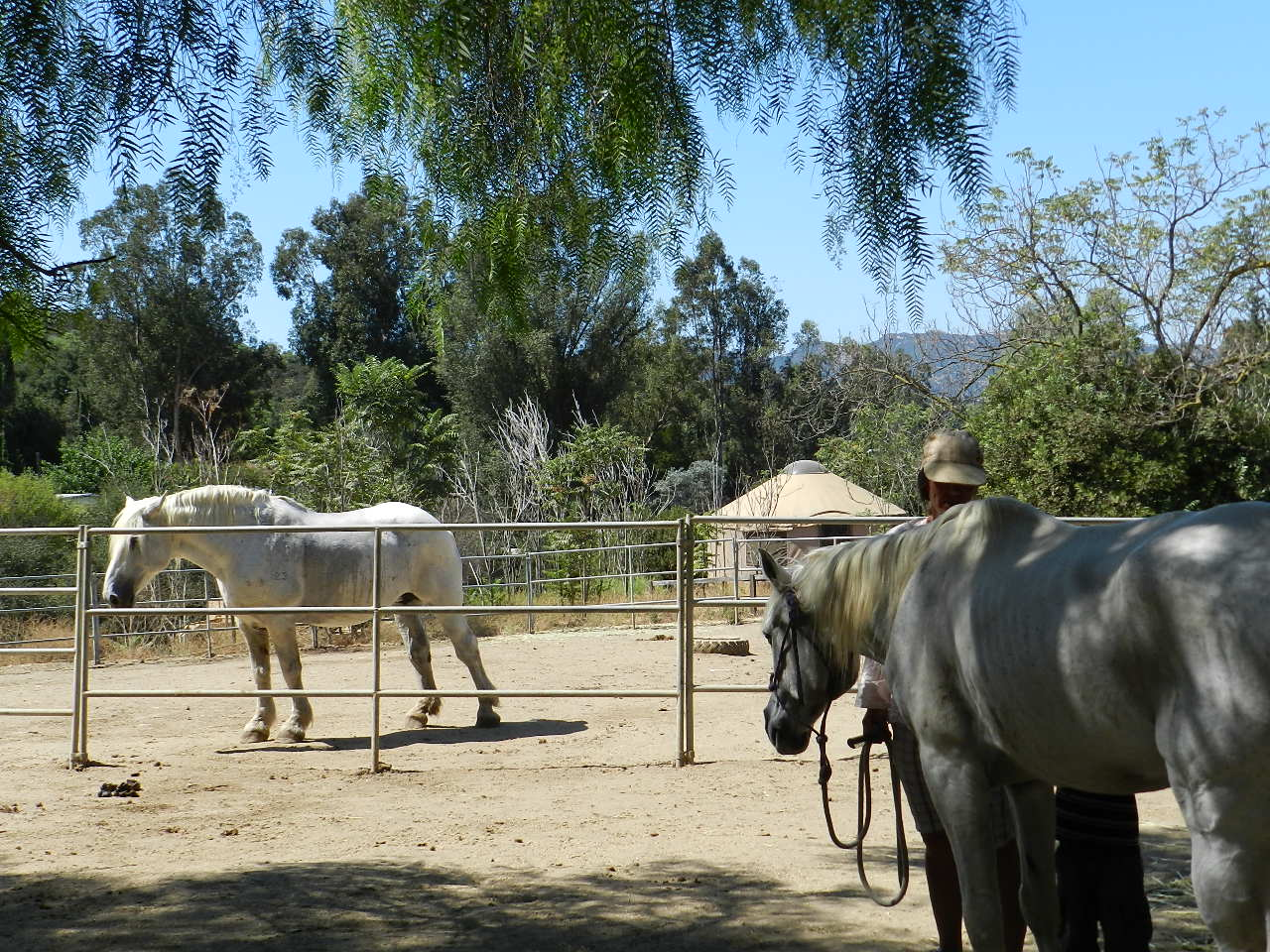 Horses waiting for their next riders at a Malibu horse ranch